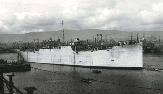 SS War Clover